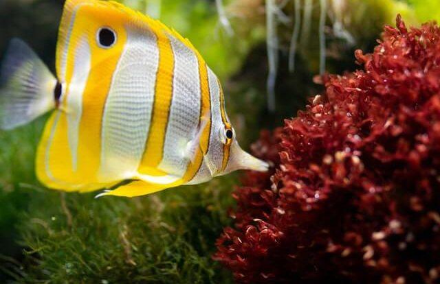 aquarium vis